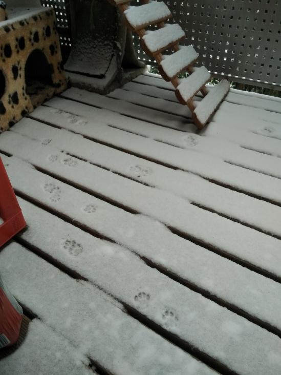Pfotenspuren im Schnee auf meinem Balkon